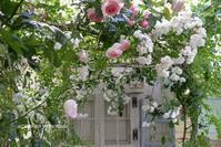 私のバラ時間~好きな場所で♪ - azumiの夢まど