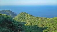 九州旅行6日目長崎野母崎半島軍艦島ツバメチドリ - 夫婦でバードウォッチング
