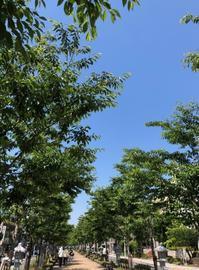 鎌倉心景「夏」 - 海の古書店