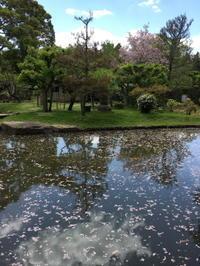 鹿のいない奈良の桜吹雪、国立博物館の庭園 - カマクラ ときどき イタリア