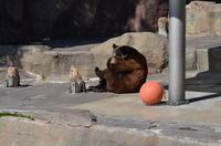 あ〜!腕が〜!足が〜!のゴロー@浜松市動物園 - peanut daily 3
