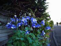 5月23日今日の写真 - ainosatoブログ02