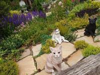 レッドヒルヒーサーの森 - A DAY IN THE LIFE/猫屋敷の日常