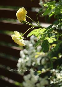 シェードが気持の良い季節に - miyorinの秘密のお庭