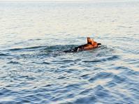 泳ぐ子犬の動画 - 徒然てんぐさ