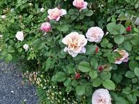 バラの庭と今の自分 - milfle なブーケ