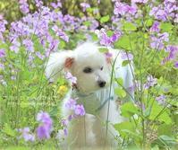 メルヘンちっく - *** life is beautiful ***