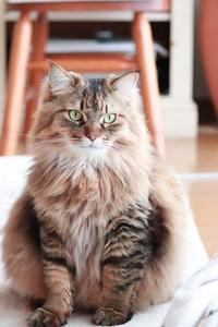 続く猫たちの血液検査 - きょうだい猫と仲良し暮らし