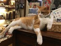 6月1日(土)2日(日)即興!楽描き!猫描き会 - 神楽坂 路地裏 ふくねこ堂