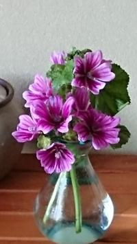 今一番きれいな時、立葵(タチアオイ)を生ける - 楽しく元気に暮らします(心満たされる生活)