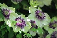 6月のアロマサロンのご案内 - Natural Aroma Life