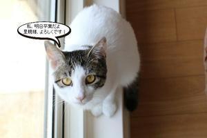 保護猫さん、明日卒業 - 保護猫さんのご縁探し