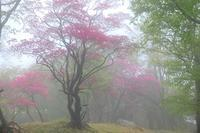 釈迦ヶ岳の思い出 - 峰さんの山あるき