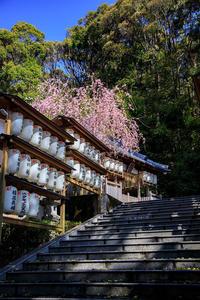 桜2019!~六所神社~ - Prado Photography!