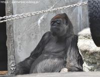 2019年4月浜松市動物園その2類人猿と熊たち - ハープの徒然草