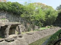 2019年4月浜松市動物園その1ネコ科猛獣 - ハープの徒然草