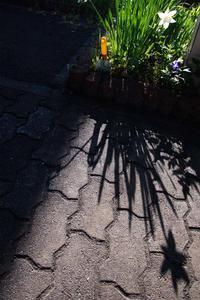 5月24日今日の写真 - ainosatoブログ02