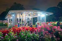 日比谷花壇大船フラワーセンター夜のバラ園『ナイトローズ』 - エーデルワイスPhoto