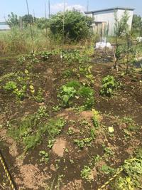 今日の菜園は〜⤵︎ - 手作りのある暮らし2