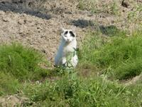 野良猫さん~白黒柄 - ミモザアカシアの日々