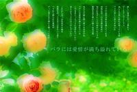 バラには愛情が満ち溢れている - poem  art. ***ココロの景色***