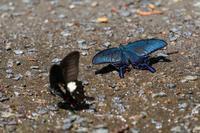 蝶々がいっぱい - 続 鳥撮るclub