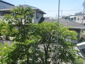 ヒメシャラの木&資格保持者たちの研修会part2♪ -