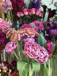 花、花、花、虫、犬、橋、霧/ San Francisco Snapshots - アメリカからニュージーランドへ
