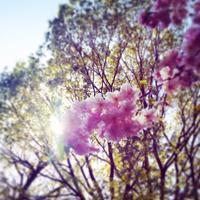 【お花見第2弾】上野公園でピクニック編 - MISS INDEPENDENT