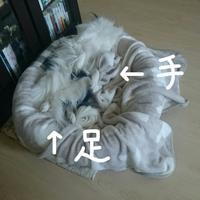 愛犬全身硬直の夜☆2か月無事ですよ~(^▽^)/ - 狆の茶々丸