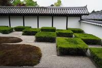 東福寺西庭 - Taro's Photo