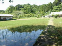 5月に夏日。上陸する生きもの。盛りの花。 - 千葉県いすみ環境と文化のさとセンター