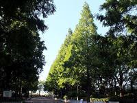 公園散歩 - しらこばとWeblog