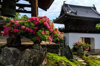 興聖寺のツツジと新緑の琴坂 - 花景色-K.W.C. PhotoBlog