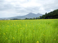 磐梯山と菜の花畑 - きのう・今日・あした