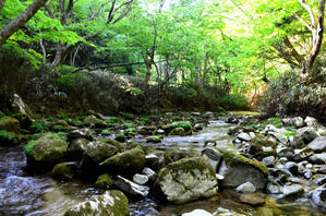 盛夏の様な五月晴れ・・「夏井川支流にて」 -
