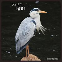私の野鳥図鑑 (公園や川) - キルトとステッチ時々にゃんこ