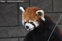 2019年4月浜松市動物園その3ペンギン雛 - ハープの徒然草