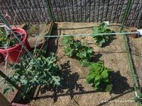 家庭菜園と花 - ひめたんママちゃんのブログ