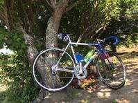 ロードバイクで印旛沼一周 - pottering