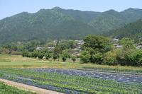京都大原の田園 - フィールド