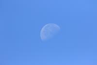 チョウゲンボウトカゲと月と - 気まぐれ野鳥写真