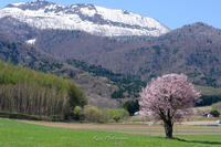 春 - Photo 森の声