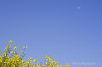 空と菜の花 - ekkoの --- four seasons --- 北海道