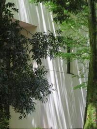 木漏れ日の散策(東京大学本郷~銀座~有楽町) - 活花生活(2)