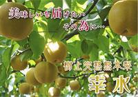 熊本梨本藤果樹園着果の様子と摘果作業(2019/後編) - FLCパートナーズストア
