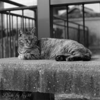 尾道路地を歩けば猫に出会う - 癒しの空間