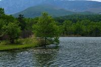 新緑のバラキ湖2019春② - 光画日記2