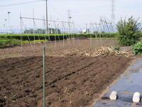 今日の畑 - 野菜tukuri