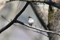 戸隠に行ってきました - 鳥撮りDAIRY